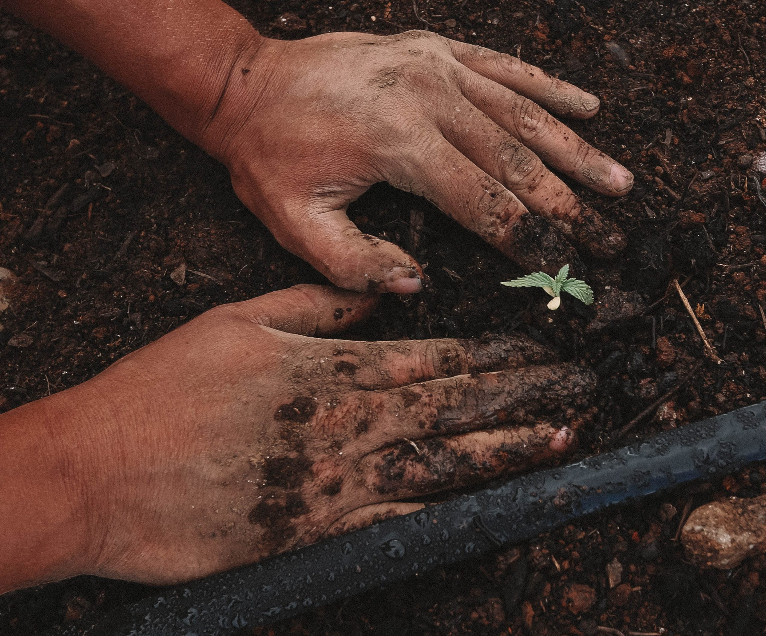 gardening-as-holistic-recovery