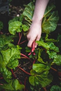 holistic-recovery-gardening